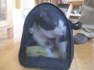Lucy Gets Stuffed Into Her Carrier